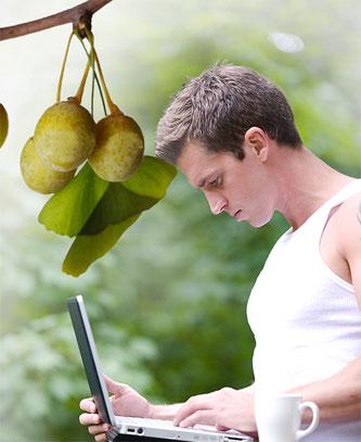 SAT Education fruit